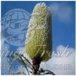 Banksia (December-June)